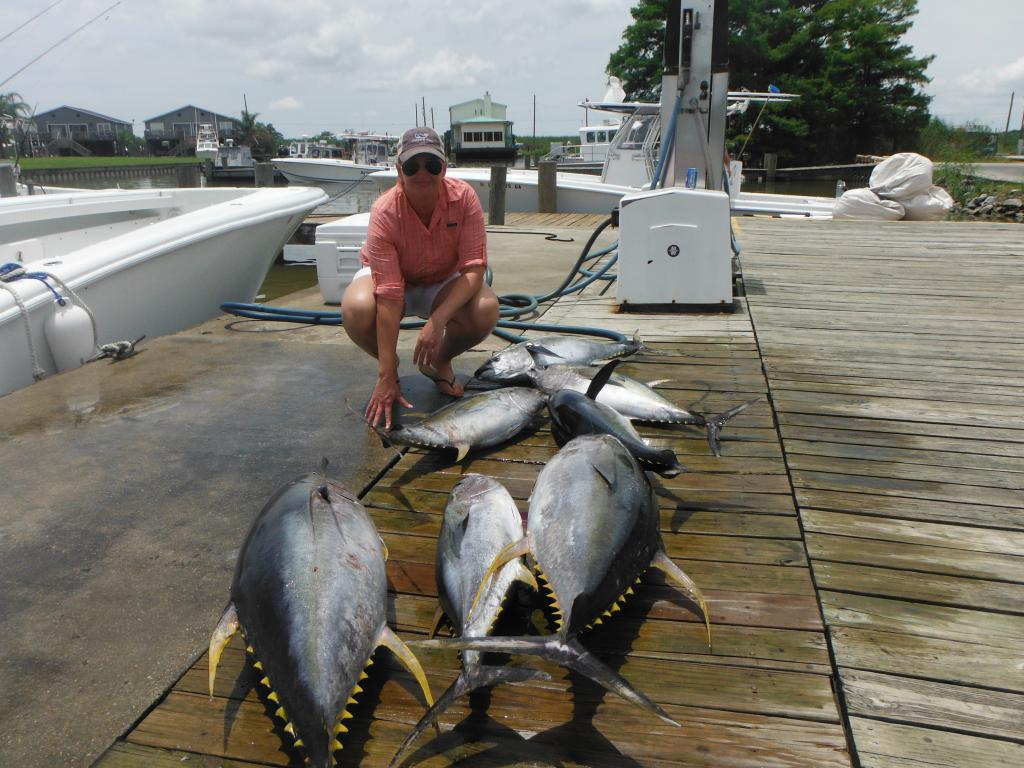 Yellowfin At The Dock